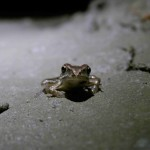 Žabka v Nové Ochozské